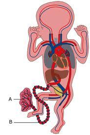 baby longen